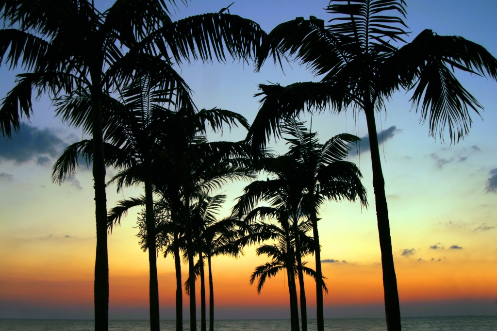 Coconut Club Vacations Reviews The Palm Beaches