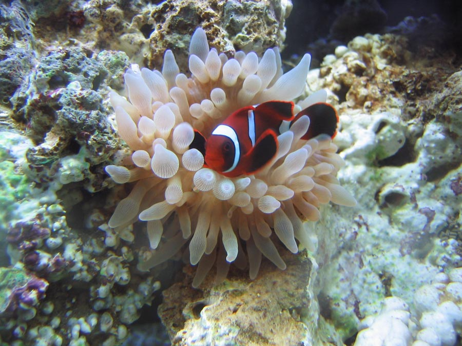 Coconut Club Vacations Takes A Trip To Atlanta An Aquarium Lovers Dream