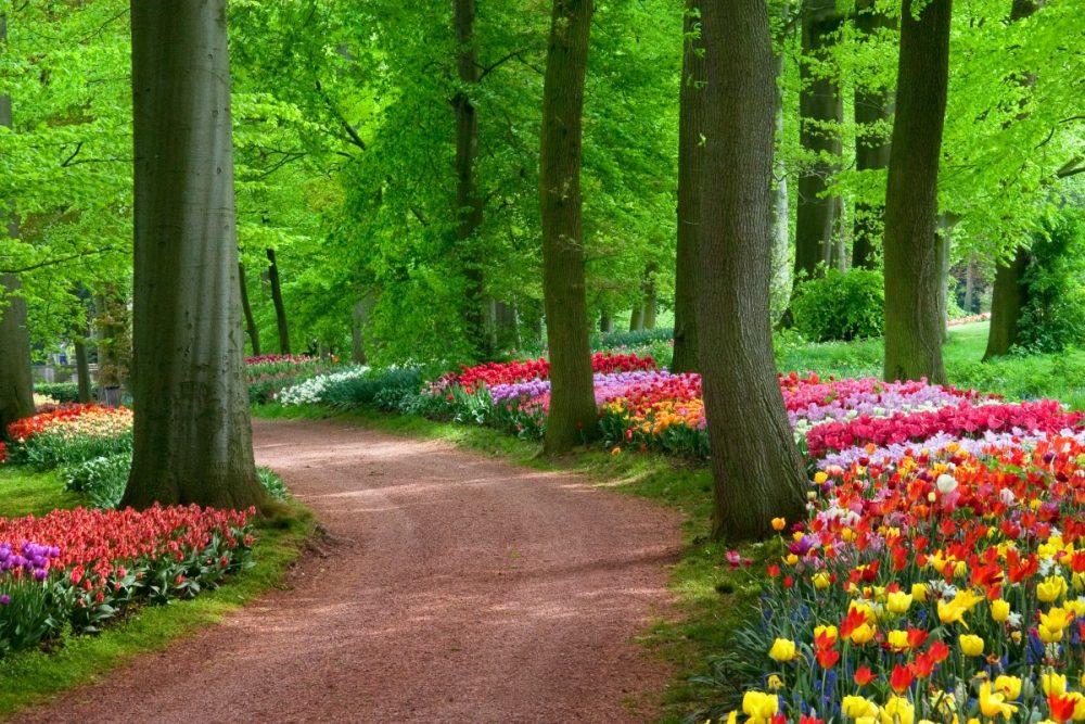 Washington's Most Beautiful Spring Parks