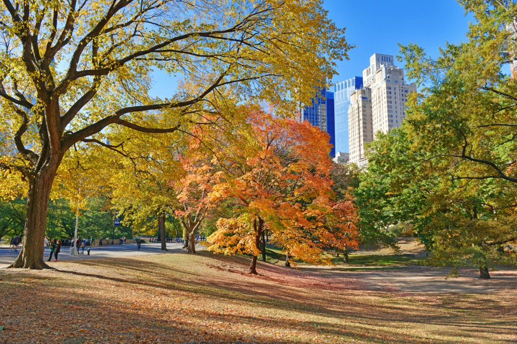 Coconut Club Vacations Reviews 5 Reasons to Visit NYC This Fall